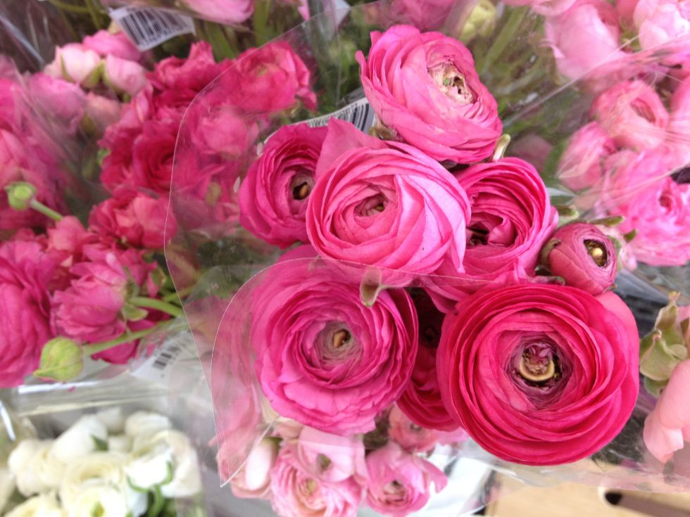 Mothers Day At Trader Joes In Madison >> Ranunculus Blossoms From Trader Joe S Trader Joe S Ranunculus