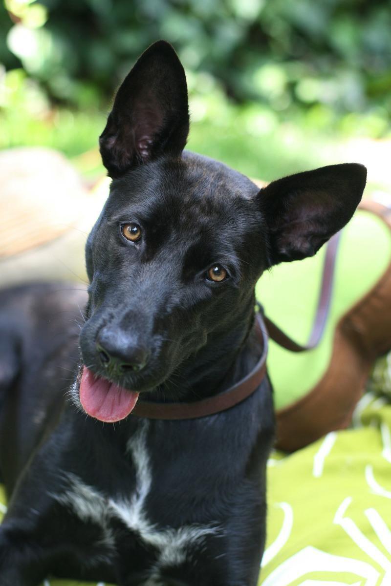 Pin by Kimberly Hatfield-Davis on Dogs   Dog adoption ...