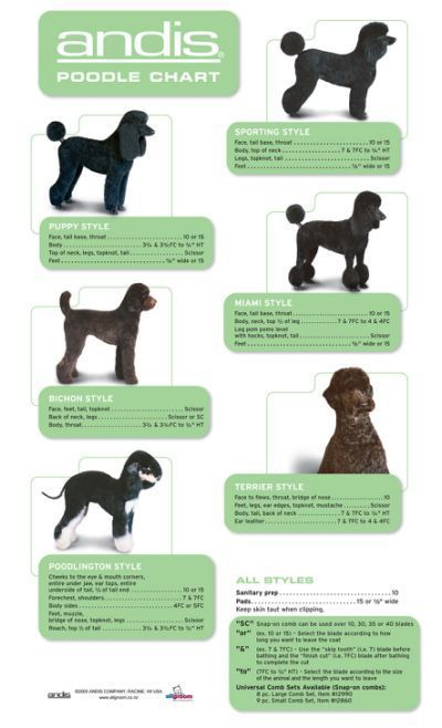 Andis Poodle Chart Http Www Allgroom Co Nz Blade Poodle Dog