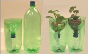Soda Bottle Hydroponics – Experiments for Kids ...