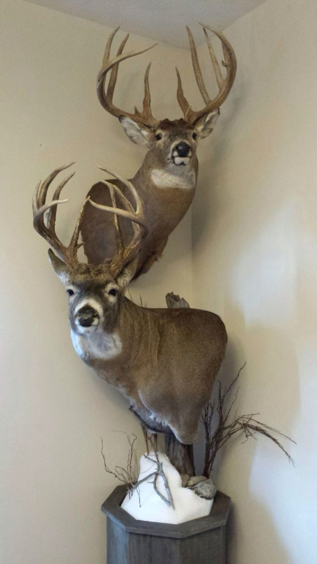 Paint Colors To Use For Whitetail Deer