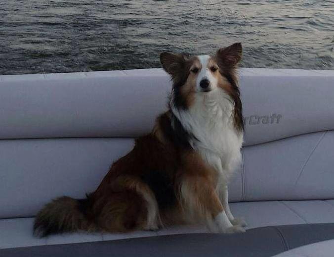 "Lostdog 112614 ""Daisy"" ArlingtonHeights IL"