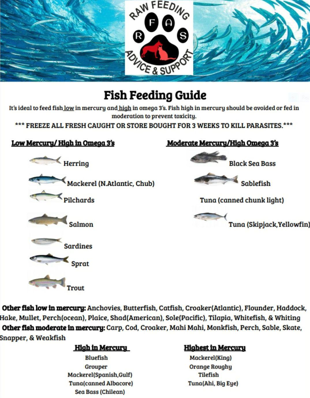 Fish Feeding Guide Raw Feeding Advice And Support Raw Feeding