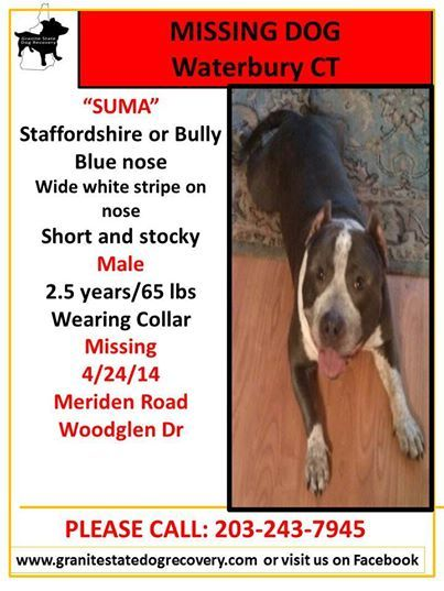 Lost Dog In Waterbury Ct Losing A Dog Dogs Bully Blue