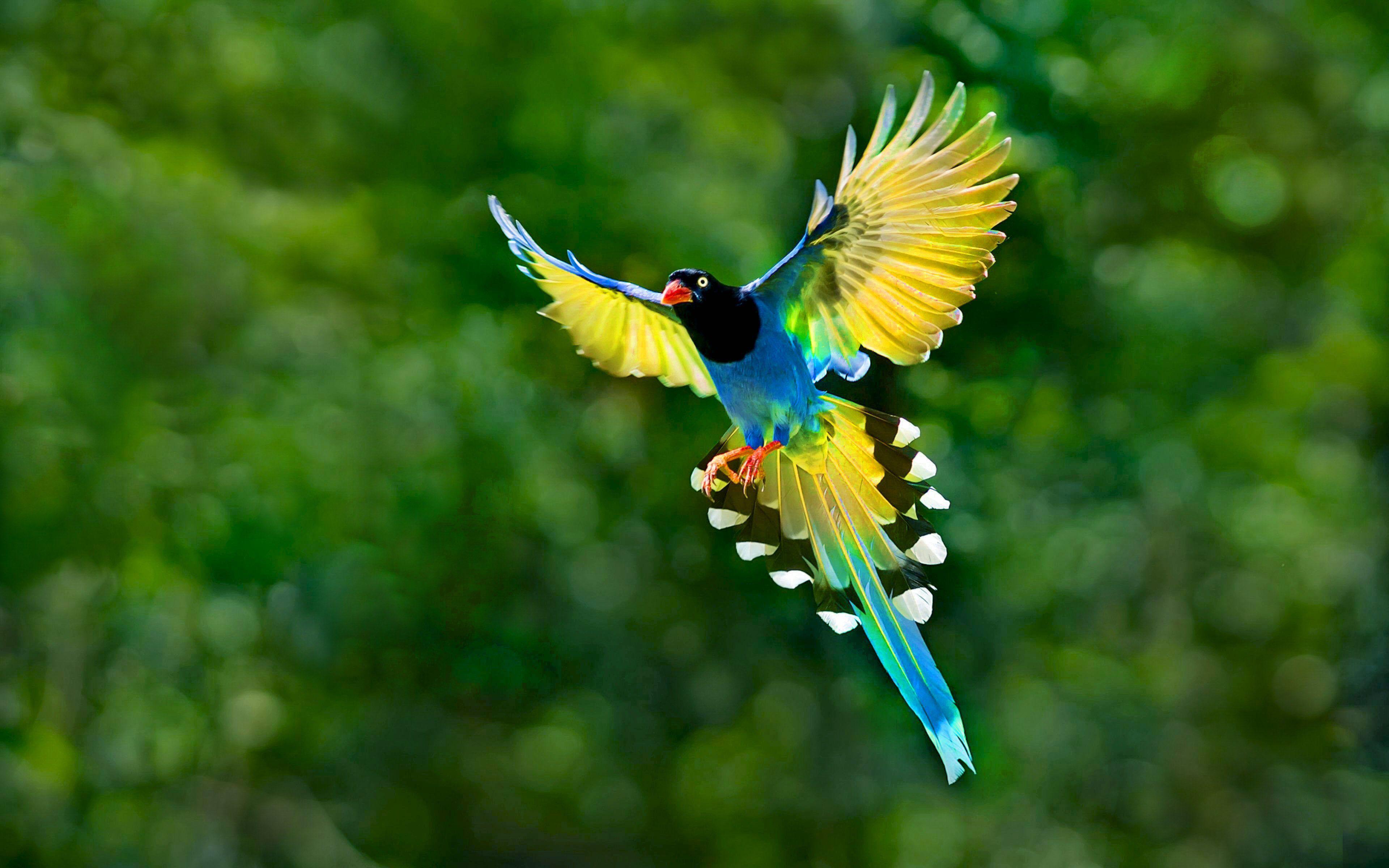Flying Birds Beautiful Hd Wallpapers 3840 2400 Via Classy Bro Pet Birds Beautiful Birds Bird Wallpaper