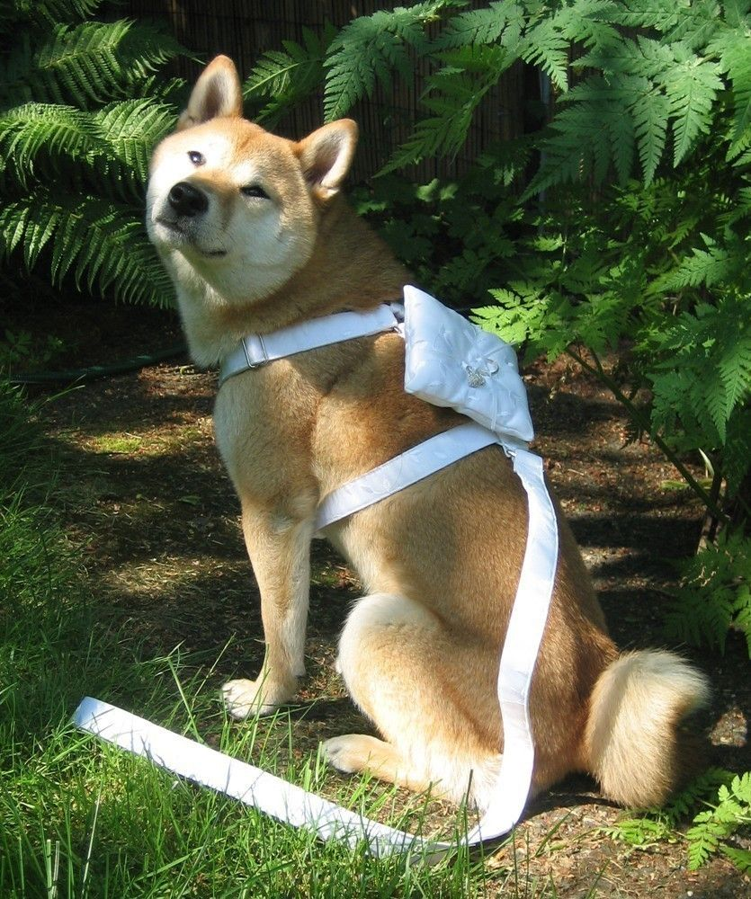 Ring bearer wedding harness for x large or large sized dogs bridal dresses ombrellifo Choice Image