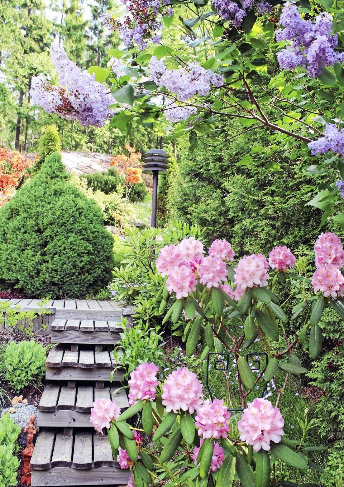 Värikkäästi kukkivilla kasveilla saat puutarhaan upeaa kukkaloistoa keväästä syksyyn. Katso Viherpihan valinnat suomalaisista puutarhoista.