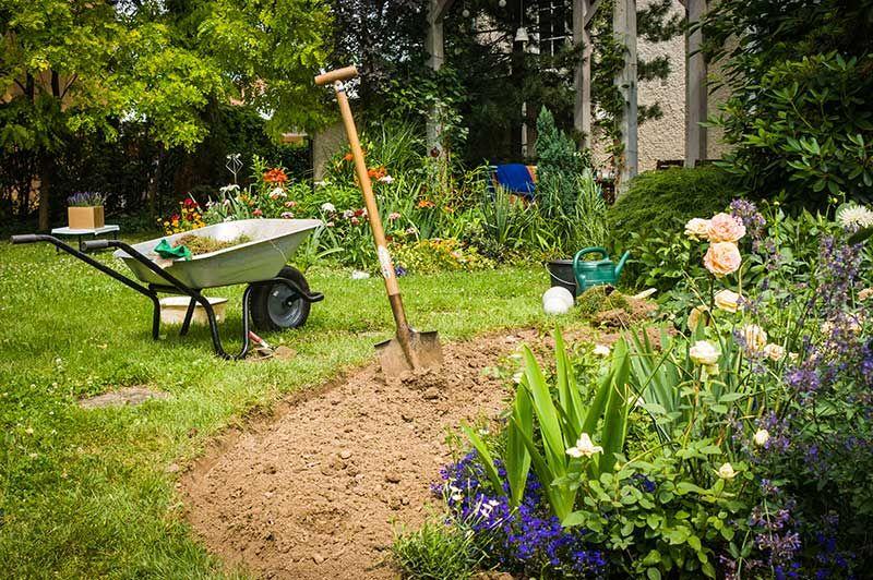 Rose Soil Guide Preparing Your Soil For Planting Rose Bushes