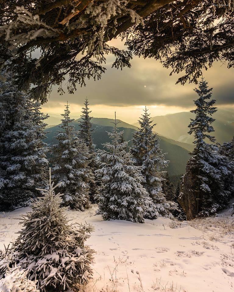 Pin By Garden Matters On Divna Kazka Zimi Winter Landscape Winter Forest Winter Scenery