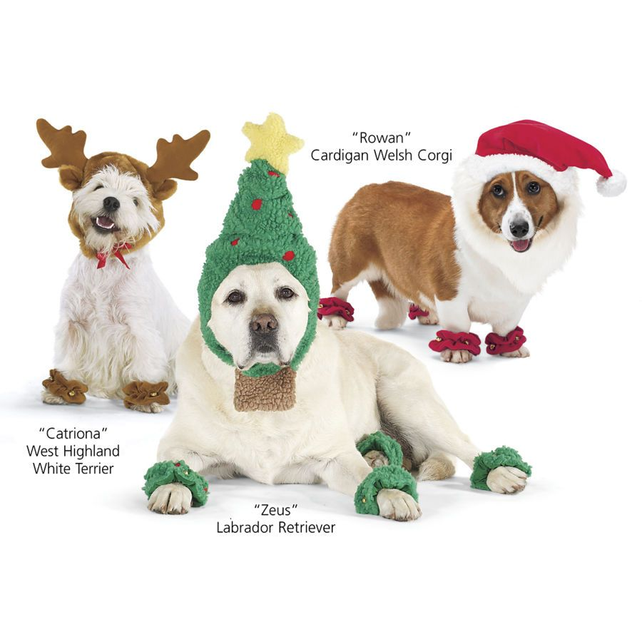 Santa Suit Dog Beds Dog Harnesses And Collars Dog Clothes And Gifts For Dog Lovers In The Company Of Dogs I Can Dog Clothes Dog Costumes Dog Fancy Dress