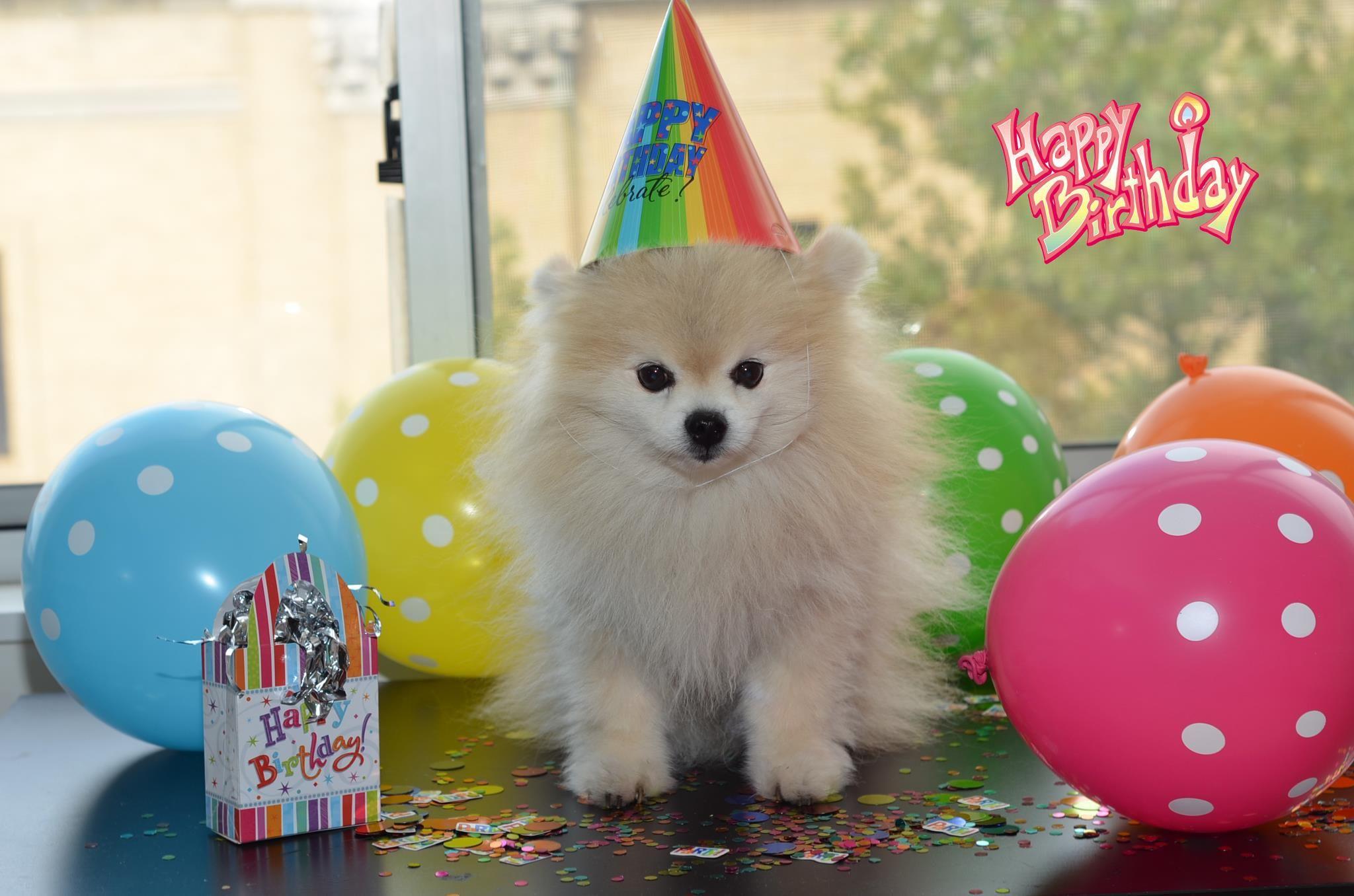 Happy Birthday Baby Happy Birthday Dog Happy Birthday Dog Meme Dog Birthday