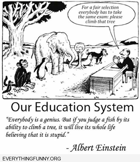 funny cartoon albert einstein quote if you judge a fishby its ability to climb a tree it willl spend its whole life believing it is stupid