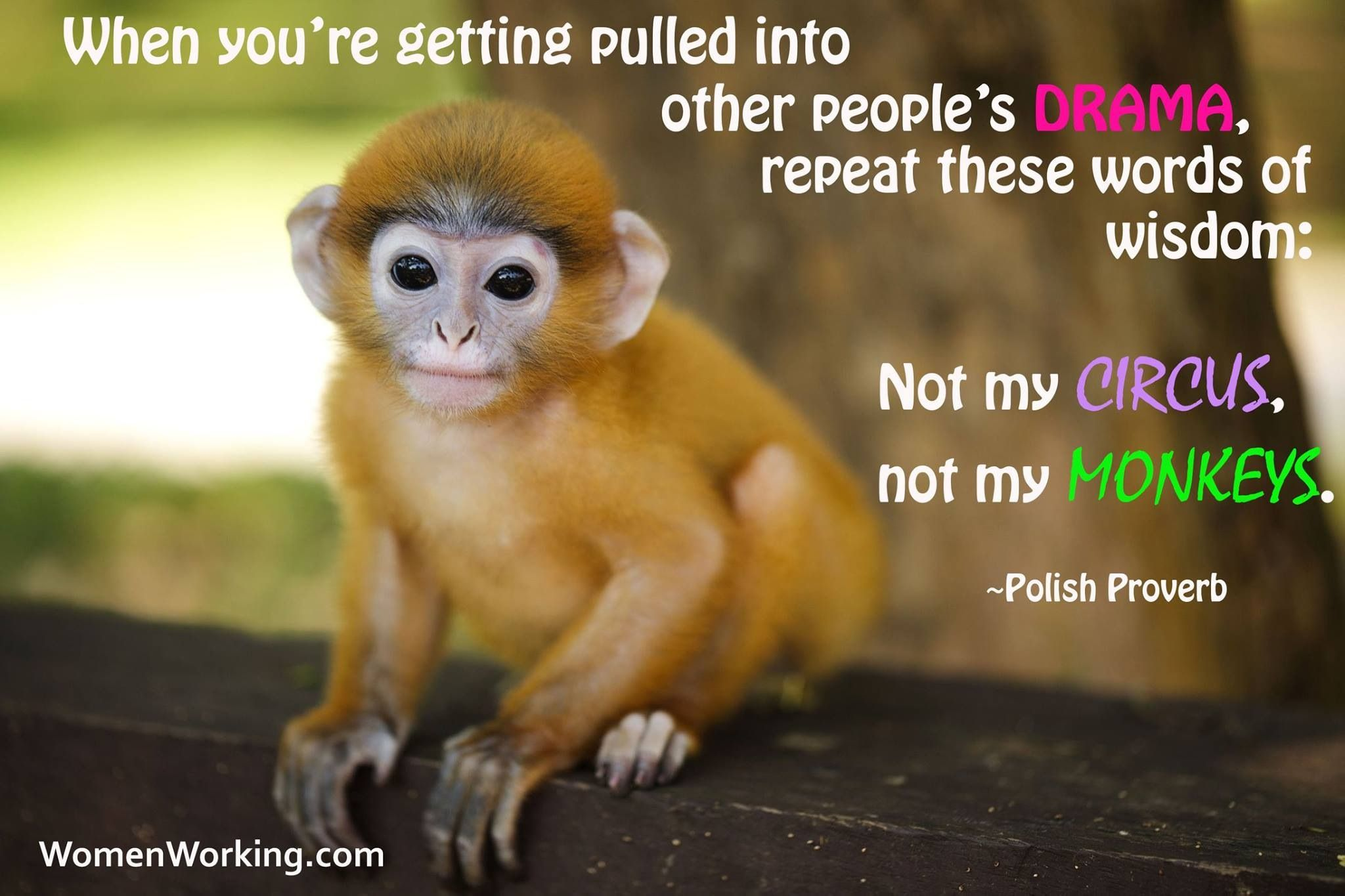 Not my circus! I don't do drama.