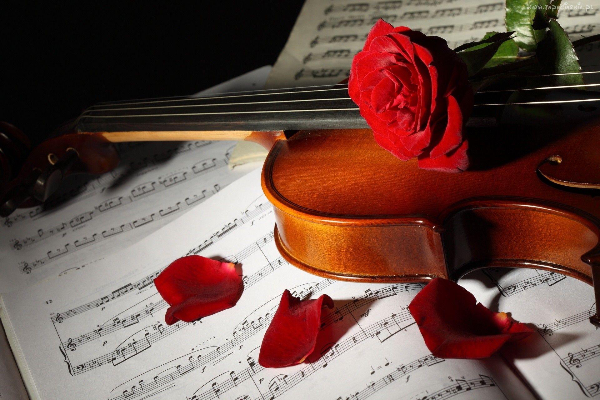 Kwiat Roza Nuty Skrzypce Skrzypce Nuty I Kwiaty