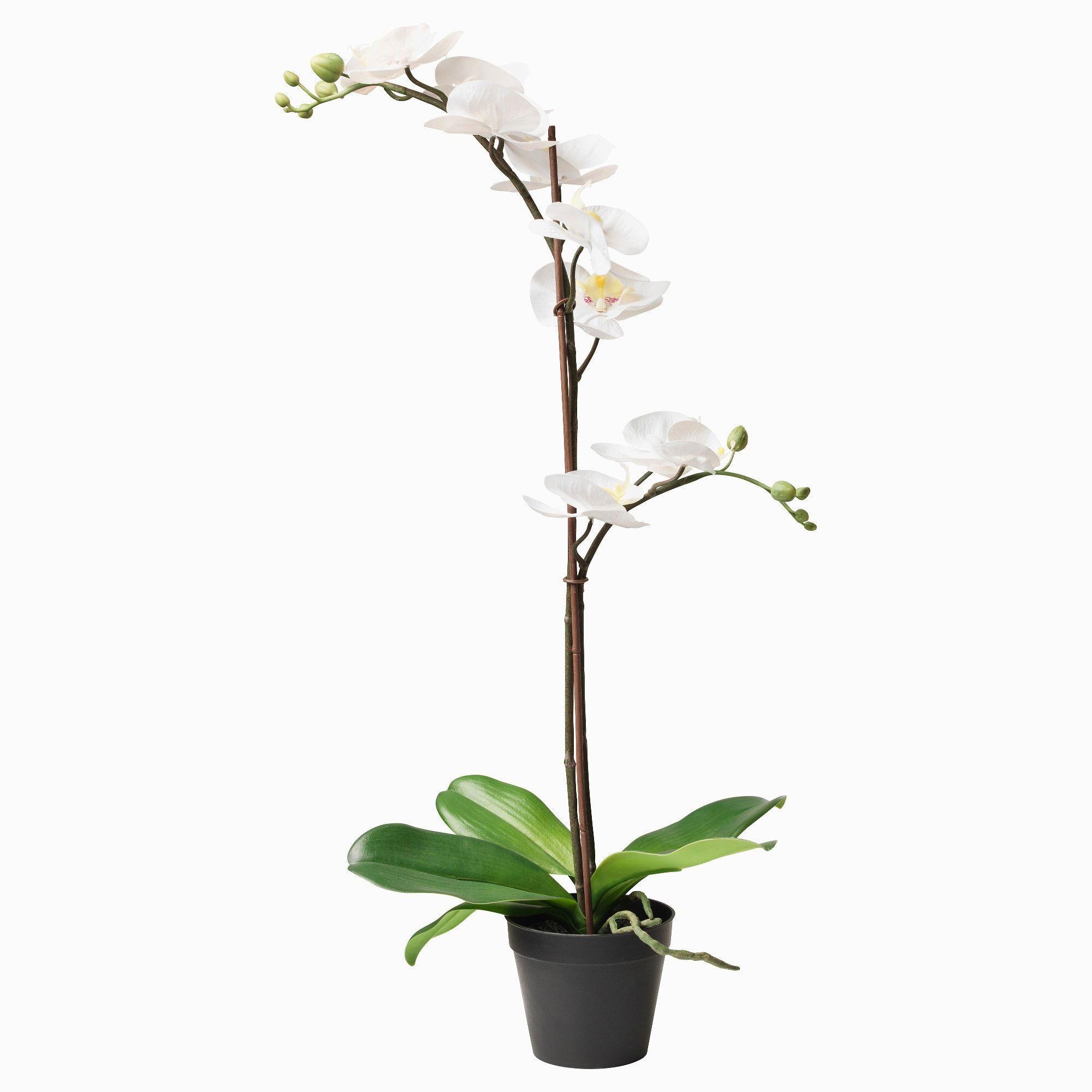 Etagere Salle De Bain Castorama Lino Pas Cher Bricorama Miroir Grossissant Lumineux Ikea Etagere S Plantes Artificielles Orchidee Blanche Decoration Plante