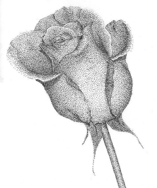 Pointillism Rose By Jowqi Deviantart Com With Images Stippling