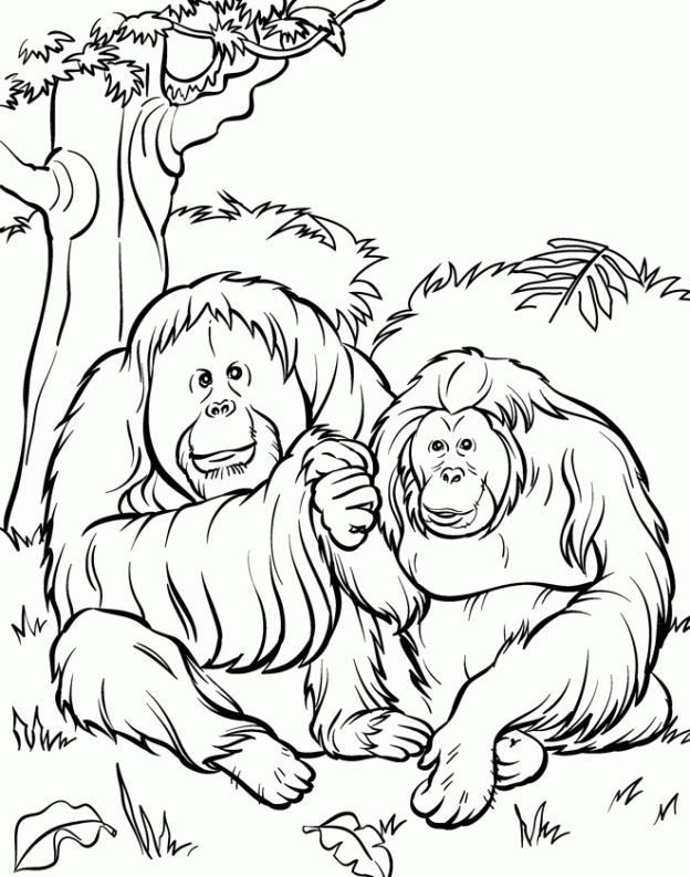 Zoo Animal Coloring Pages 2