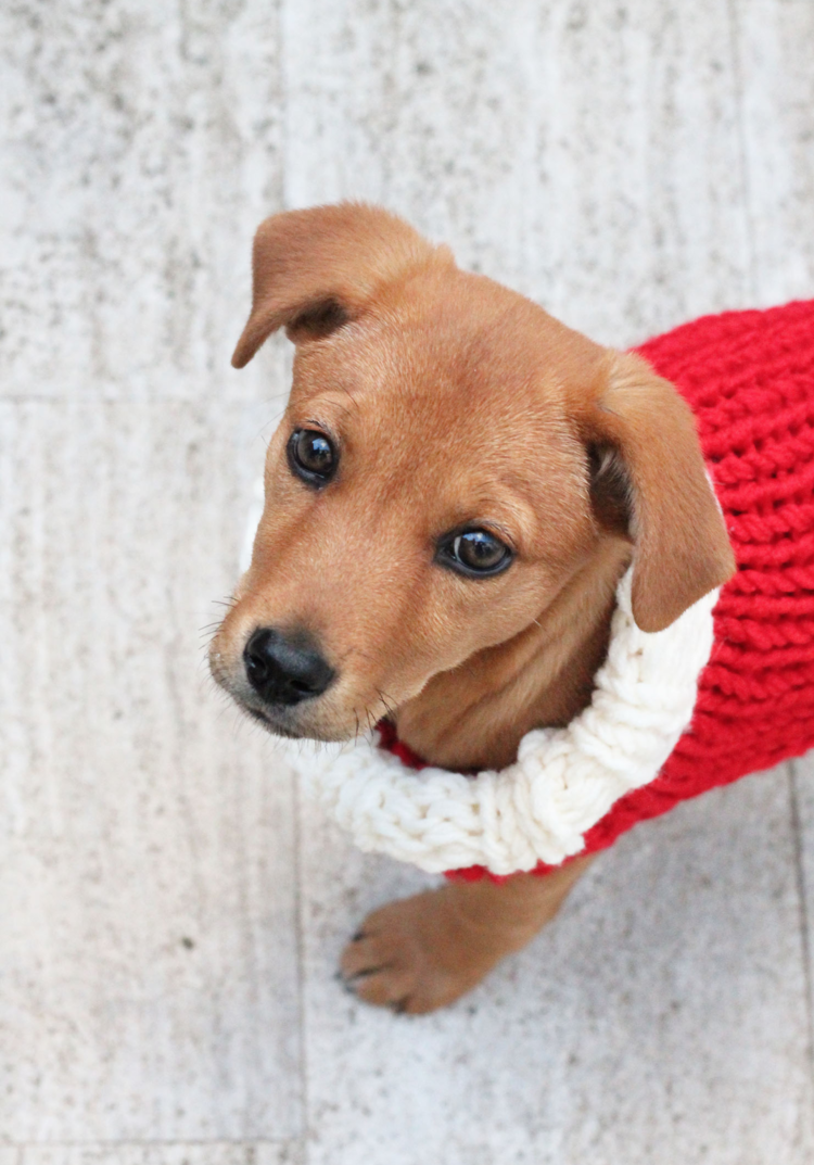 Fancy Knitted Dog Pattern Picture Collection - Sewing Pattern for ...