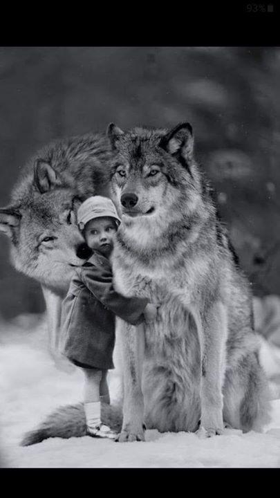 من أنبأك أن أباك ذئب يحكى أن أعرابية وجدت ذئبا صغيرا جرو ذئب قد ولد للتو فحنت عليه وأخذته وربته وكانت تطعمه من حل Wolf Dog Animals Beautiful Cute Animals