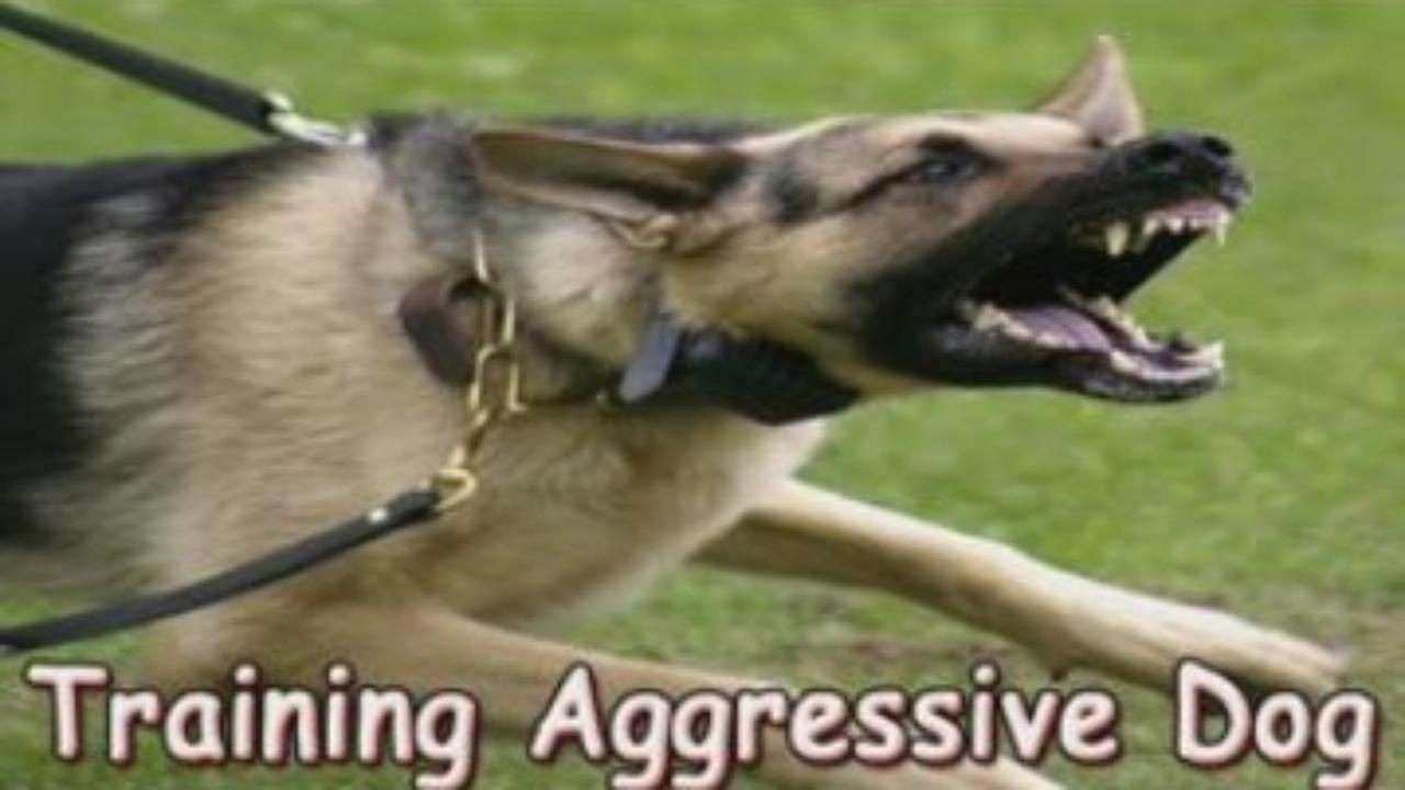 How To Stop Dog Aggression Towards Other Dogs Video Dailymotion