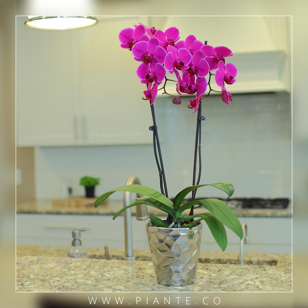 Mantenimiento Remueva flores marchitas y tallos secos con unas ...