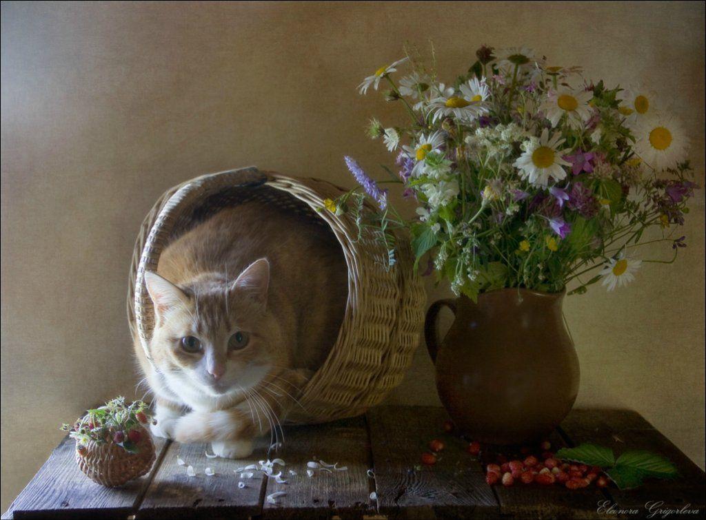 животных картинки фотонатюрморты с кошками игры
