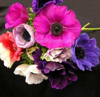 Anemones Assorted Flowers Anemone Flower Bridesmaid Flowers Anemone