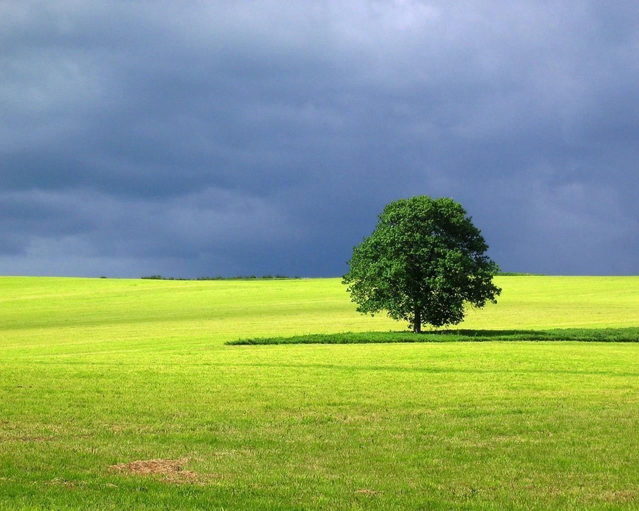 Simple Landscape With Trees Landscape Landscape Trees Landscape Wallpaper