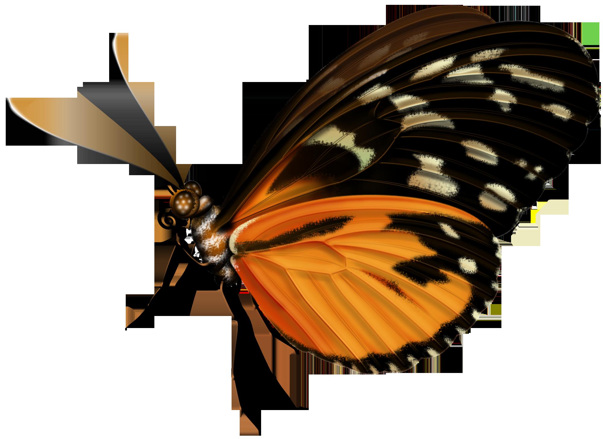 Бабочка вид сбоку картинки