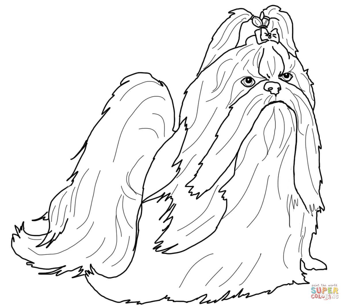 Shih Tzu In Show Coat Horse Coloring Pages Puppy Coloring Pages Dog Coloring Page