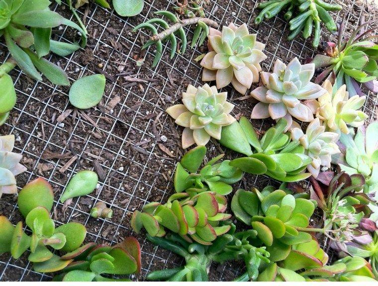 Jardín Vertical Significado Y Consejos Para Su Cultivo De