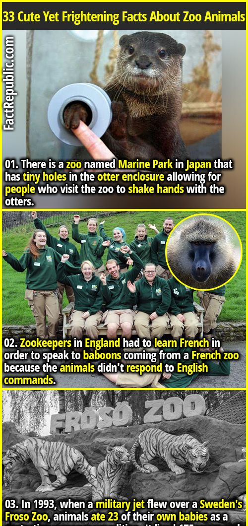 33 Cute Yet Frightening Facts About Zoo Animals Fact