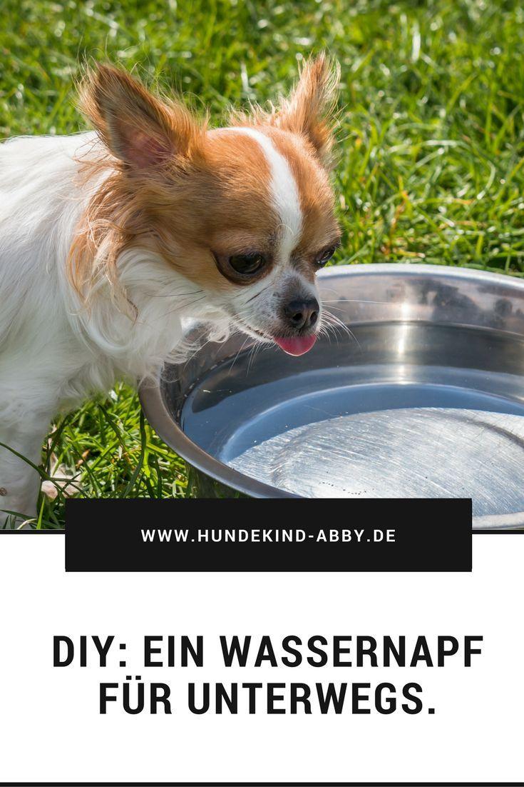 Diy Ein Wassernapf Fur Unterwegs Mit Bildern Hunde Hund Diy Hund Chihuahua