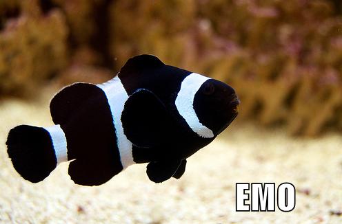 Emo Saltwater Fish Tanks Marine Fish Saltwater Aquarium Fish