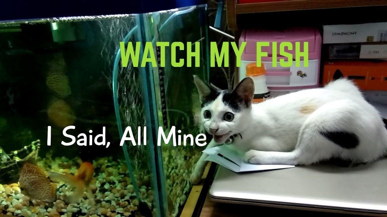 Baby Cat Watching Aquarium Fish Baby Cats Aquarium Fish Cats