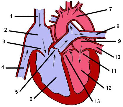 Free Anatomy Quizes