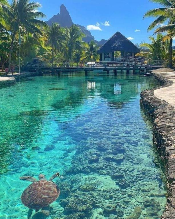 Bora Bora Paysage Paysage Bora Bora Honeymoon Bora Bora Vacation Bora Bora Tahiti Bora Bora Beautiful Places To Travel Beautiful Places Places To Travel