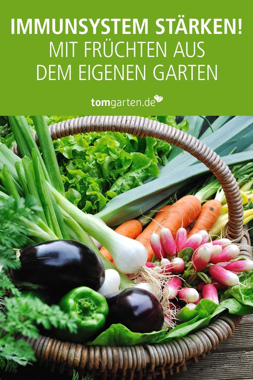 Gemuse Fur Beet Und Balkon Balkon Gemuse Gurke Healthy Vegetables Planting Vegetables Stuffed Peppers