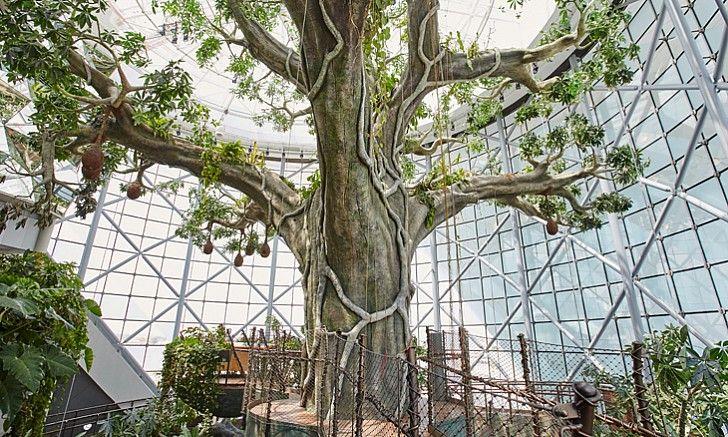 The Green Planet Indoor Ecosystem In Citywalk Jumeirah