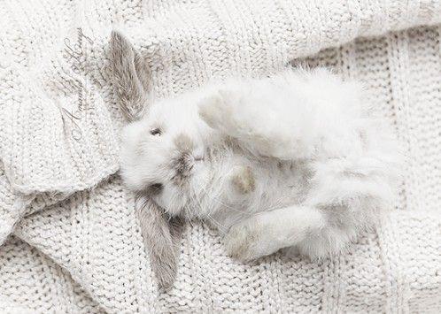 Animals / Bunny ♥