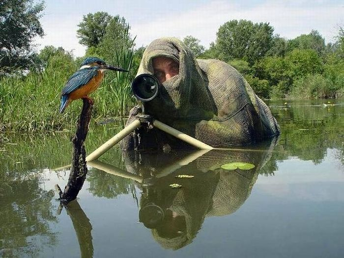 photographer filming kingfisher