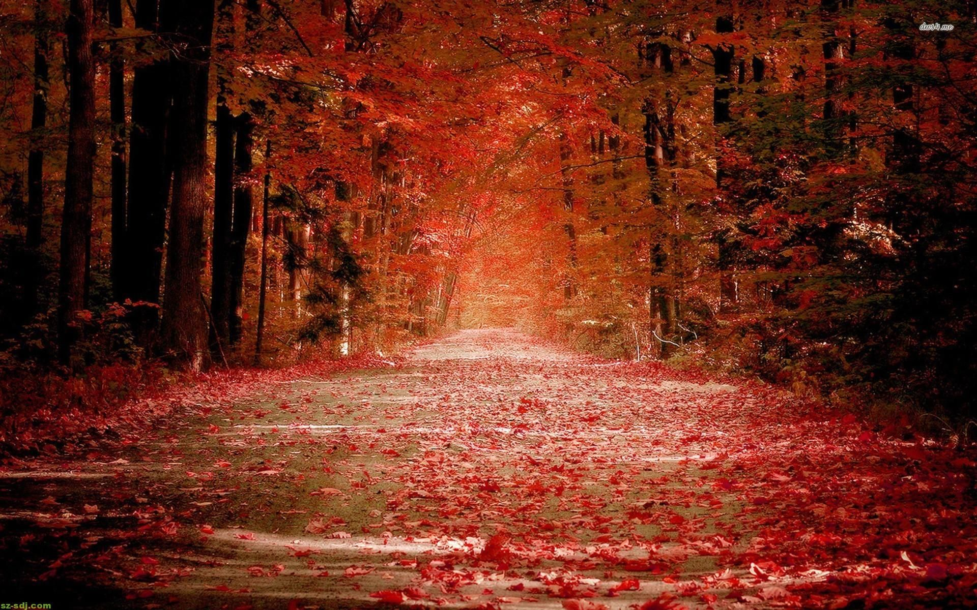 Silent Road At Red Autumn Wallpaper Widescreen Hd