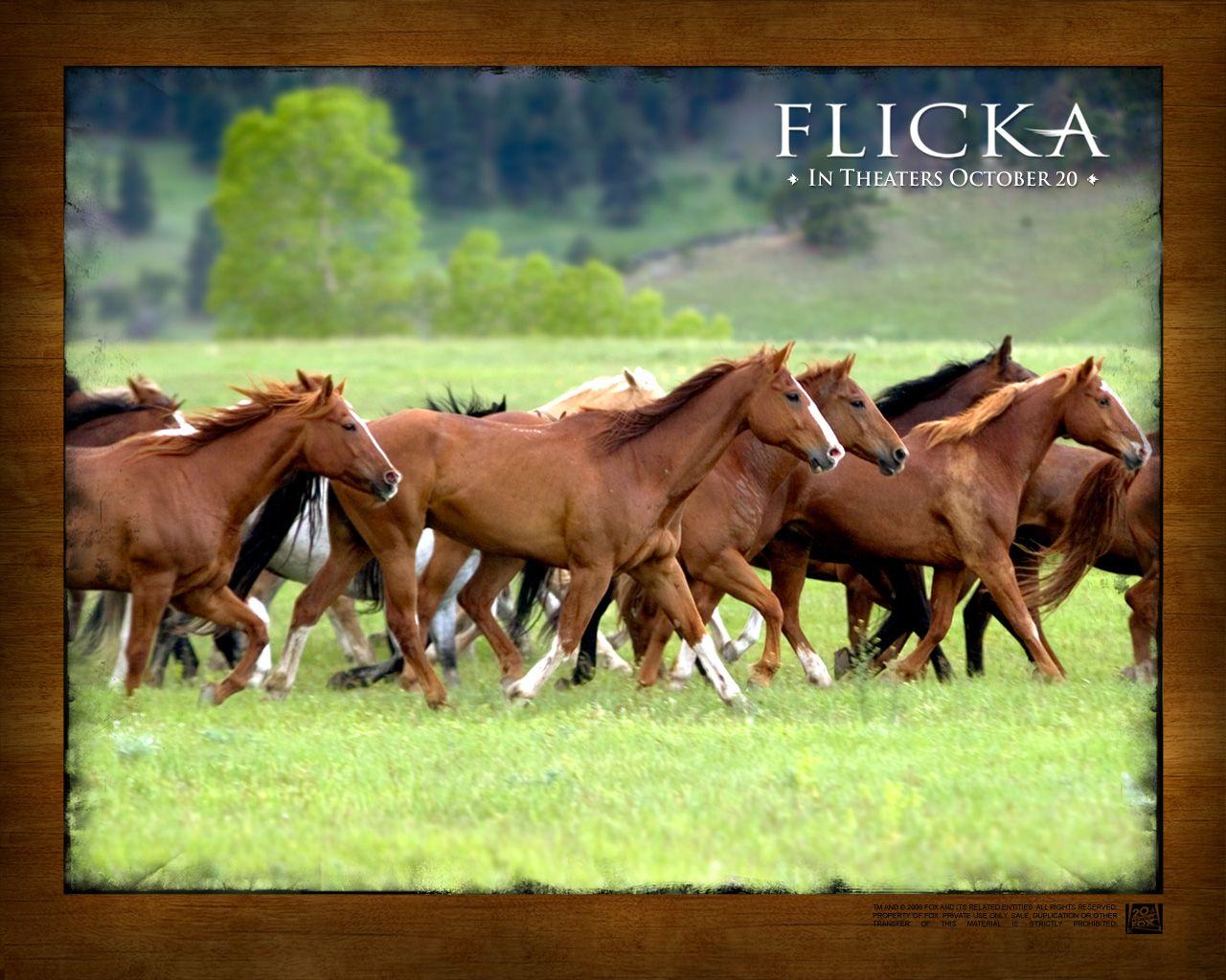 Popular Wallpaper Horse Flicka - b15b08825a7dac859c7834425e5236c6  Graphic_434617.jpg