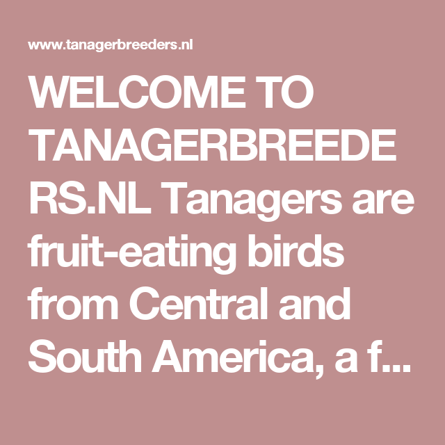 Welcome to tanagerbreeders tanagers are fruit eating birds from nl tanagers are fruit eating birds from central and south america freerunsca Images
