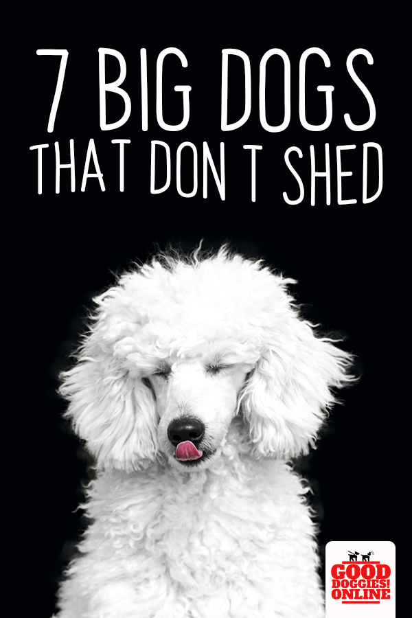 Large Dog Breeds That Don T Shed Dogs Dog Names Dog Breeds That Dont Shed