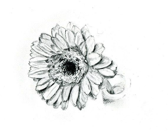 Pencil Drawing Of A Gerbera Daisy Art Print Nature By Zendrawing 7 50 Pencil Drawings Of Flowers Flower Drawing Pencil Drawings