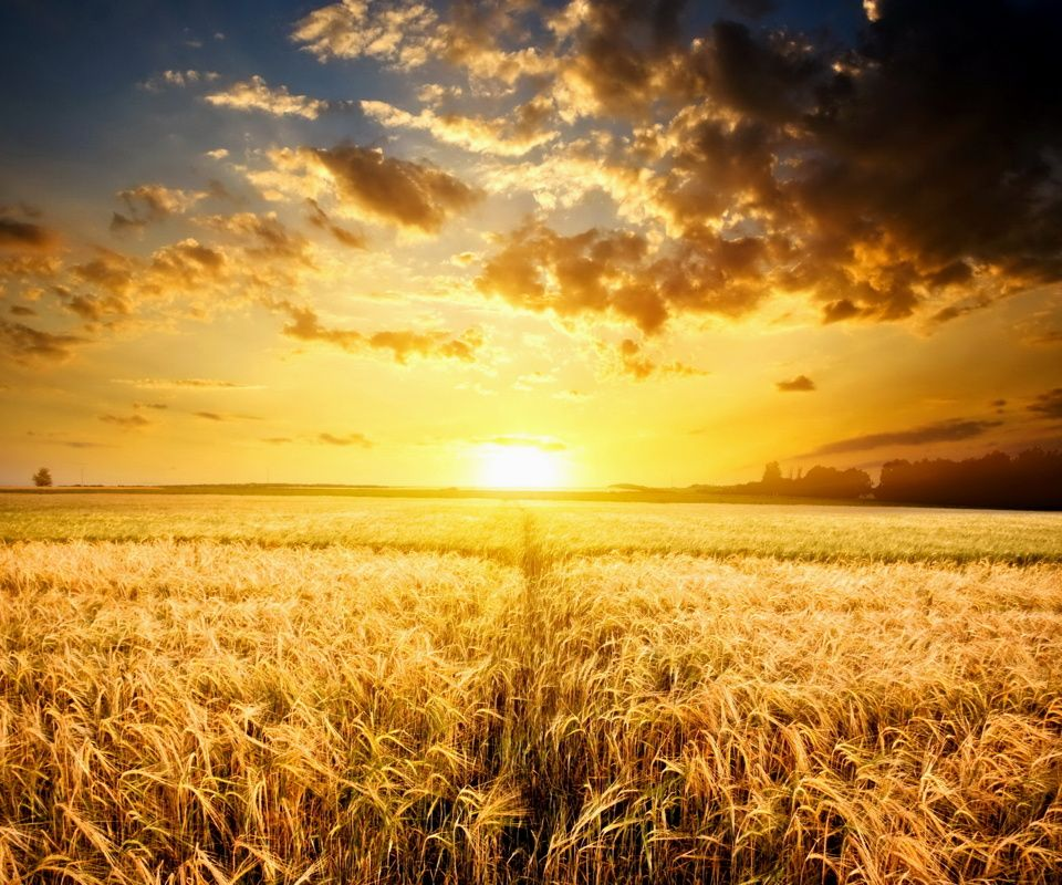 field landscapes the best of gold sunrise sunset swiftly flow