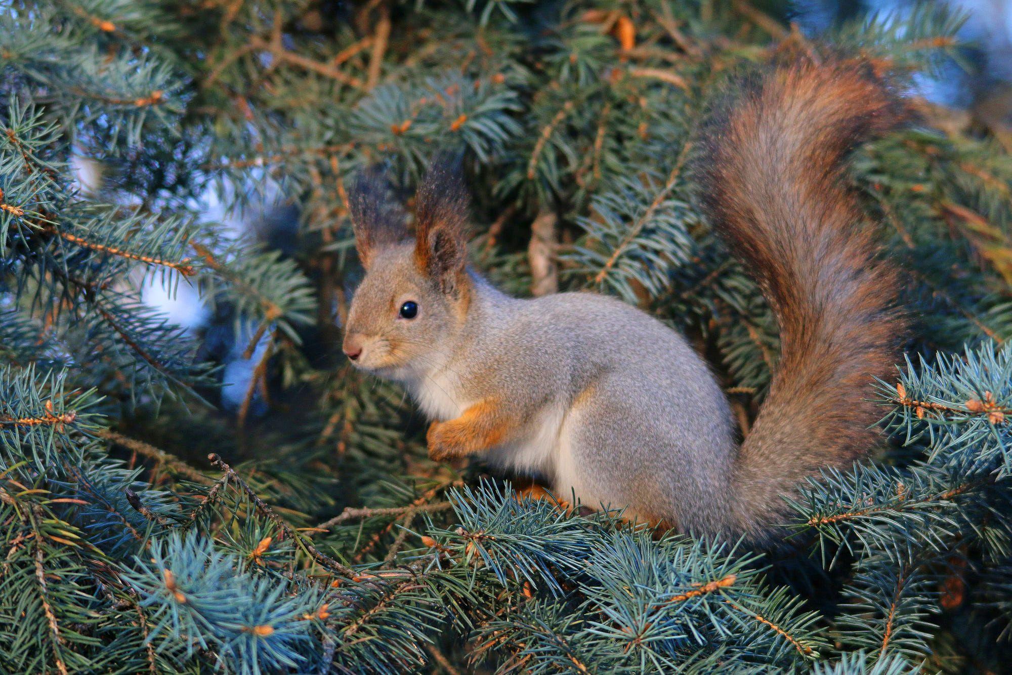 Squirrel By Alexey Rodionov Cute Cute Squirrel Sloth