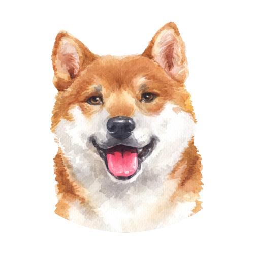 Happy Shiba Inu Watercolor Art In 2021 Shiba Inu Dog Sketch Shiba Inu Dog