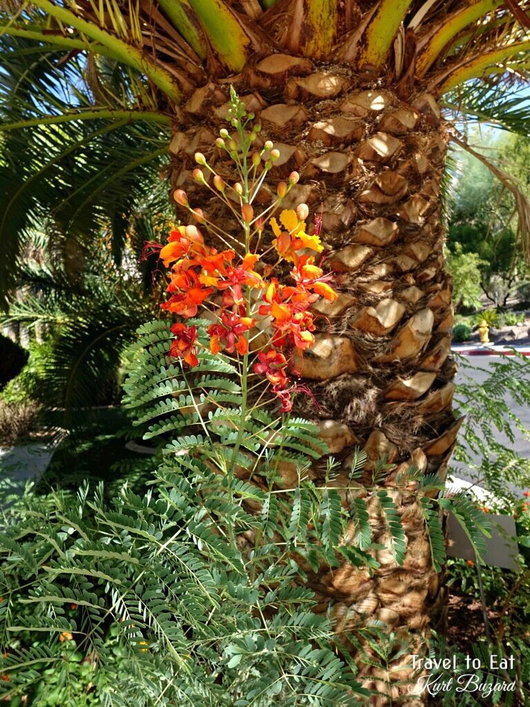 Spring Landscapes in Las Vegas Birds of paradise plant